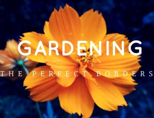 The Perfect Garden Borders