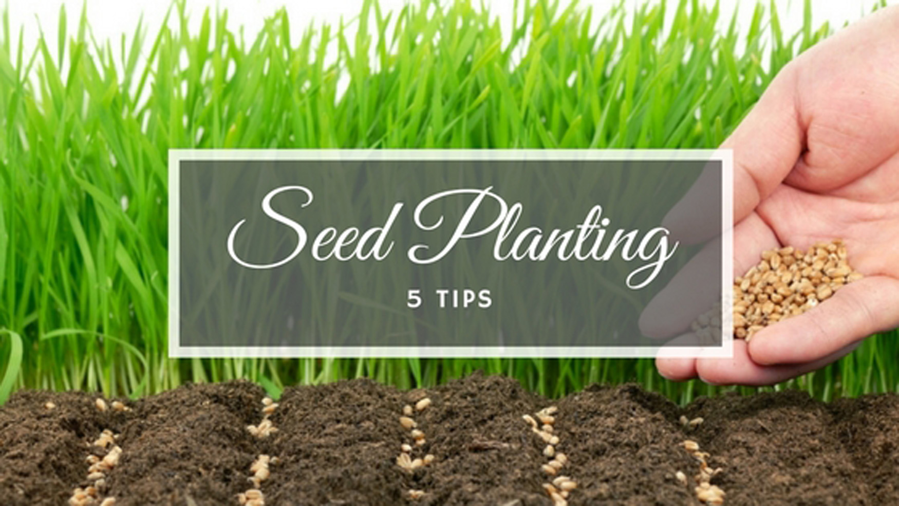 5 tips for seed planting