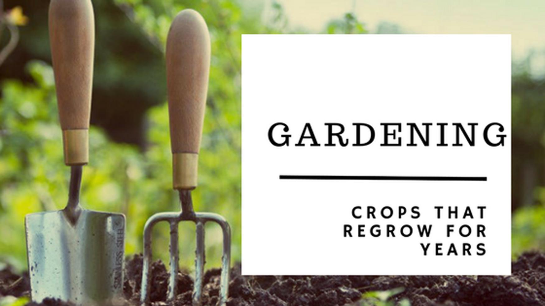 crops that regrow