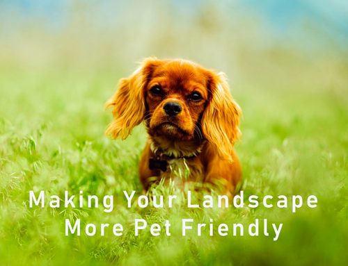 Making your landscape more pet friendly