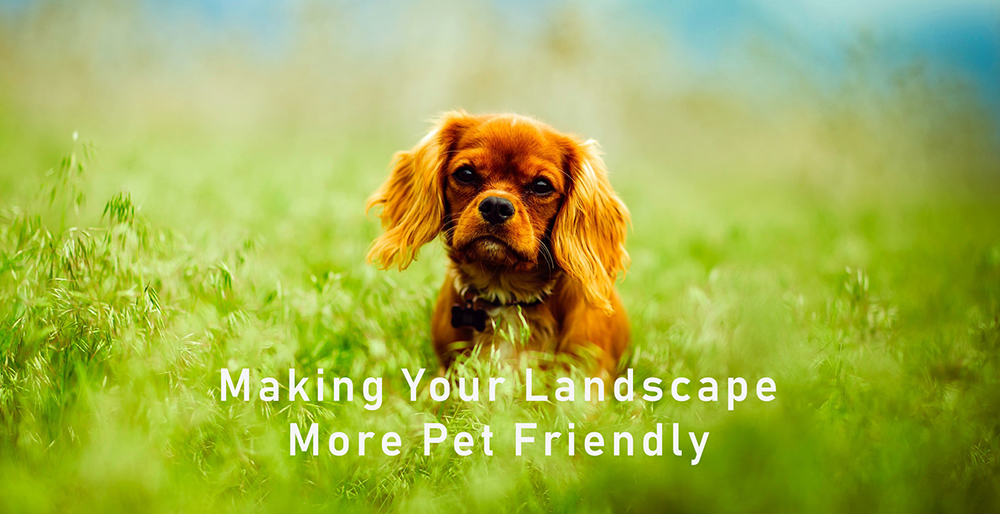 making your landscape pet friendly