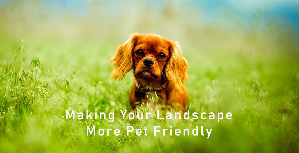 making your landscape pet friendly