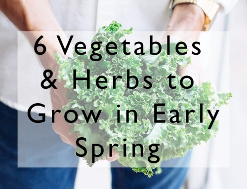 6 Easy to Grow Vegetables & Herbs for Early Spring