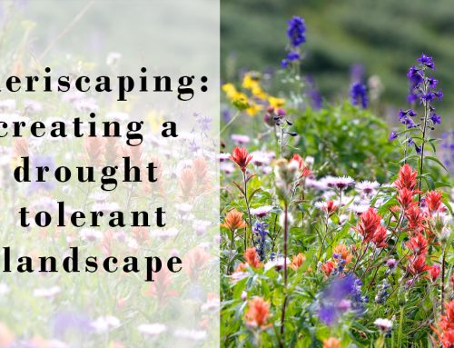 Xeriscaping to Create a Drought Tolerant Landscape