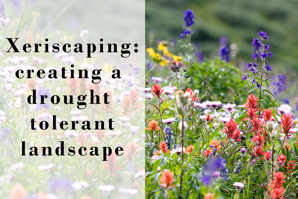 Xeriscaping with a subalpine meadow in Colorado