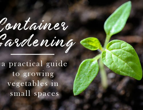 A Guide to Container Gardening