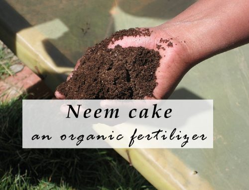Using Neem Cake as on Organic Slow Release Fertilizer