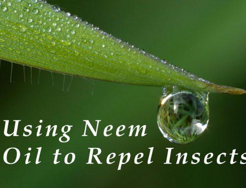 Neem Oil: A Natural Bug Repellent
