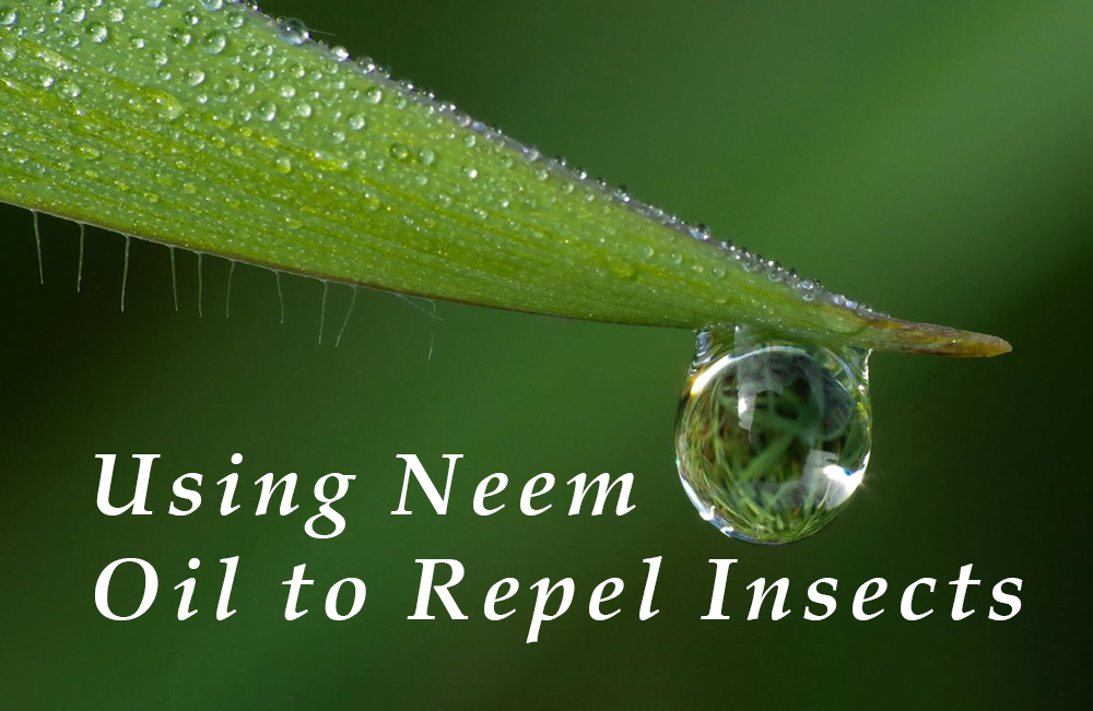 using neem oil to repel insects