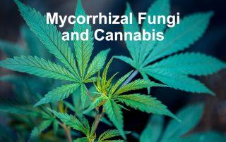 Mycorrhizal fungi and cannabis growing
