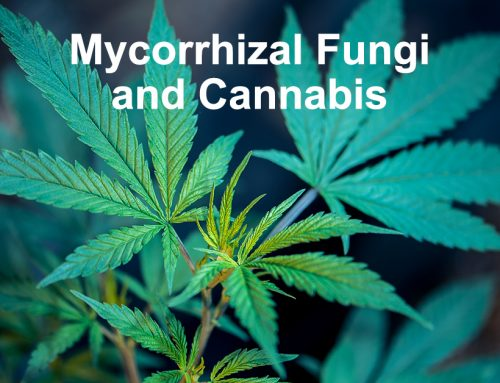Mycorrhizal Fungi and Cannabis
