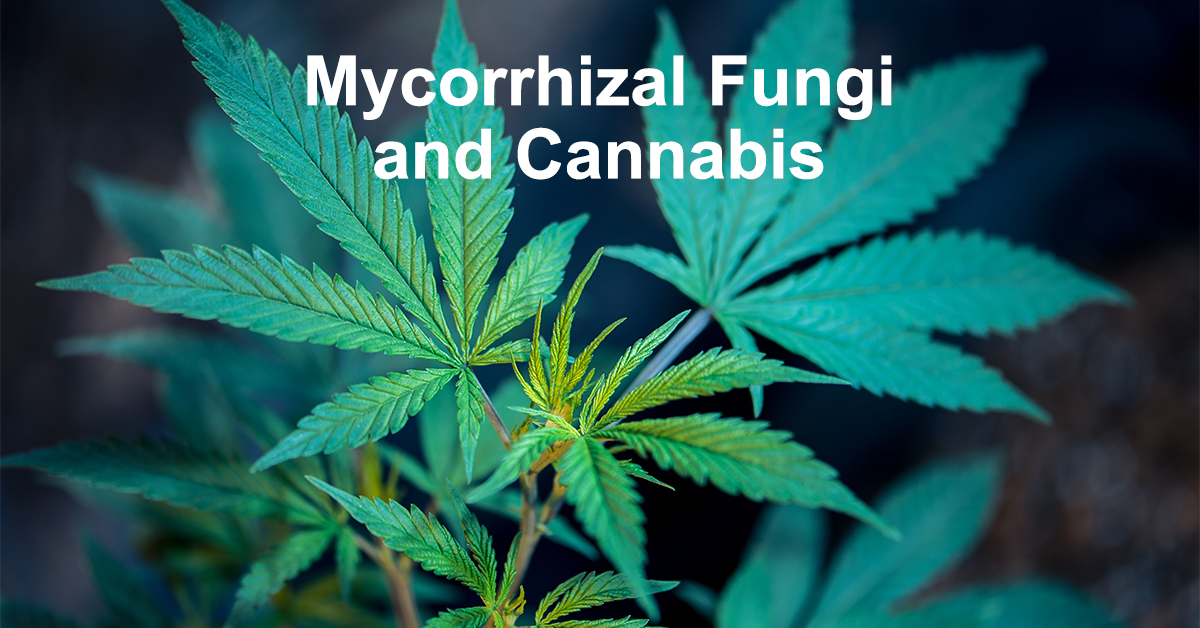 Mycorrhizal fungi and cannabis growing