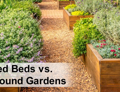 Raised Garden Beds vs. In-Ground Gardens