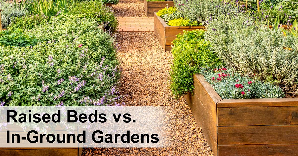 Raised Garden Beds vs. In-Ground Gardens