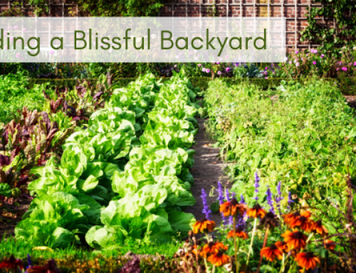 Building a Blissful Backyard