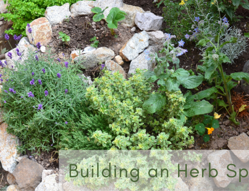 Herb Spiral: How to Build One