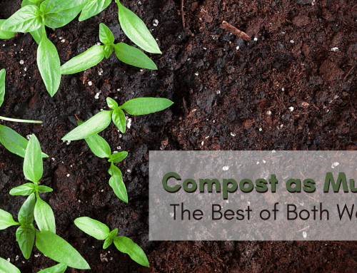 Compost as Mulch: The Best of Both Worlds