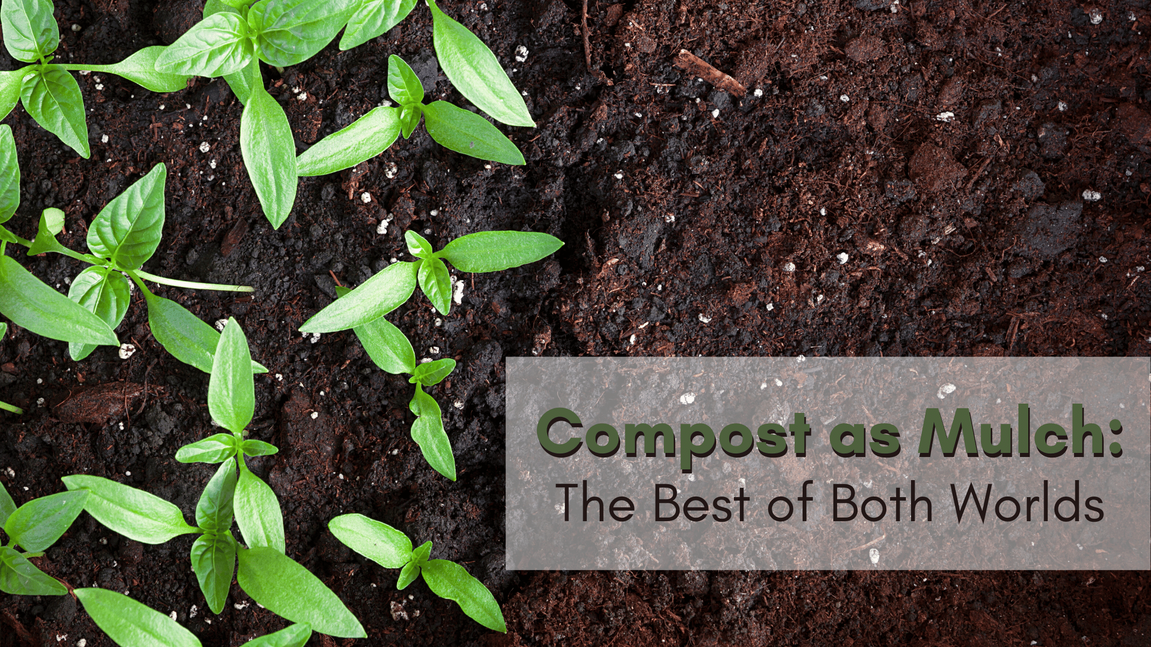 Using compost as mulch is the best way to get your garden green.
