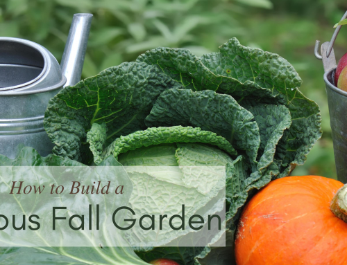 How to Build a Fabulous Fall Garden