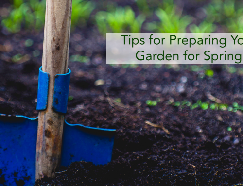 Tips for Preparing Your Garden for Spring