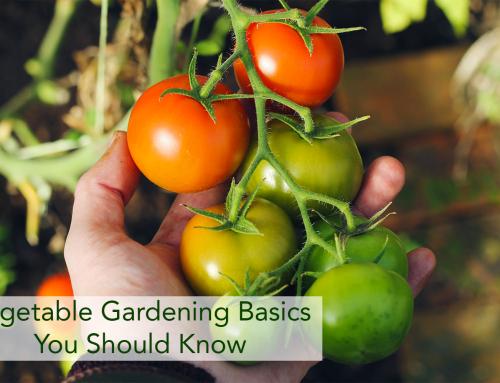 Vegetable Gardening Basics You Should Know