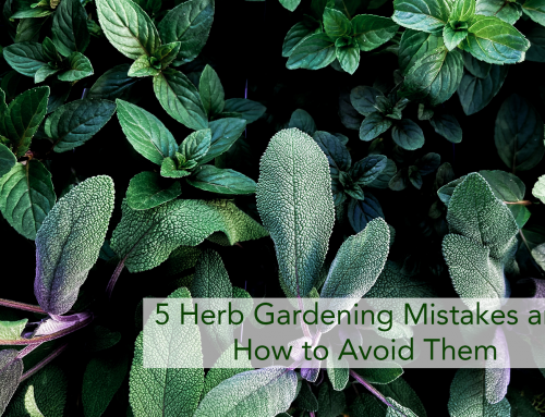 5 Herb Gardening Mistakes and How to Avoid Them