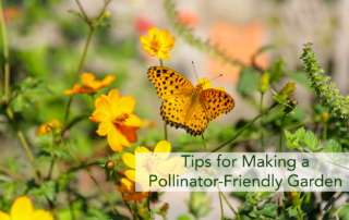 A orange butterfly on orange flowers planted in a pollinator-friendly garden.