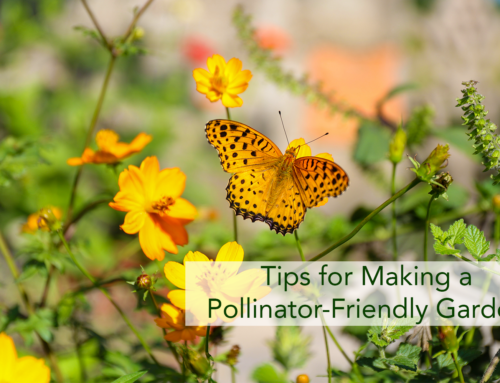 Tips for Making a Pollinator-Friendly Garden