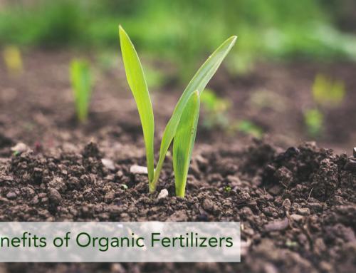 Benefits of Organic Fertilizers