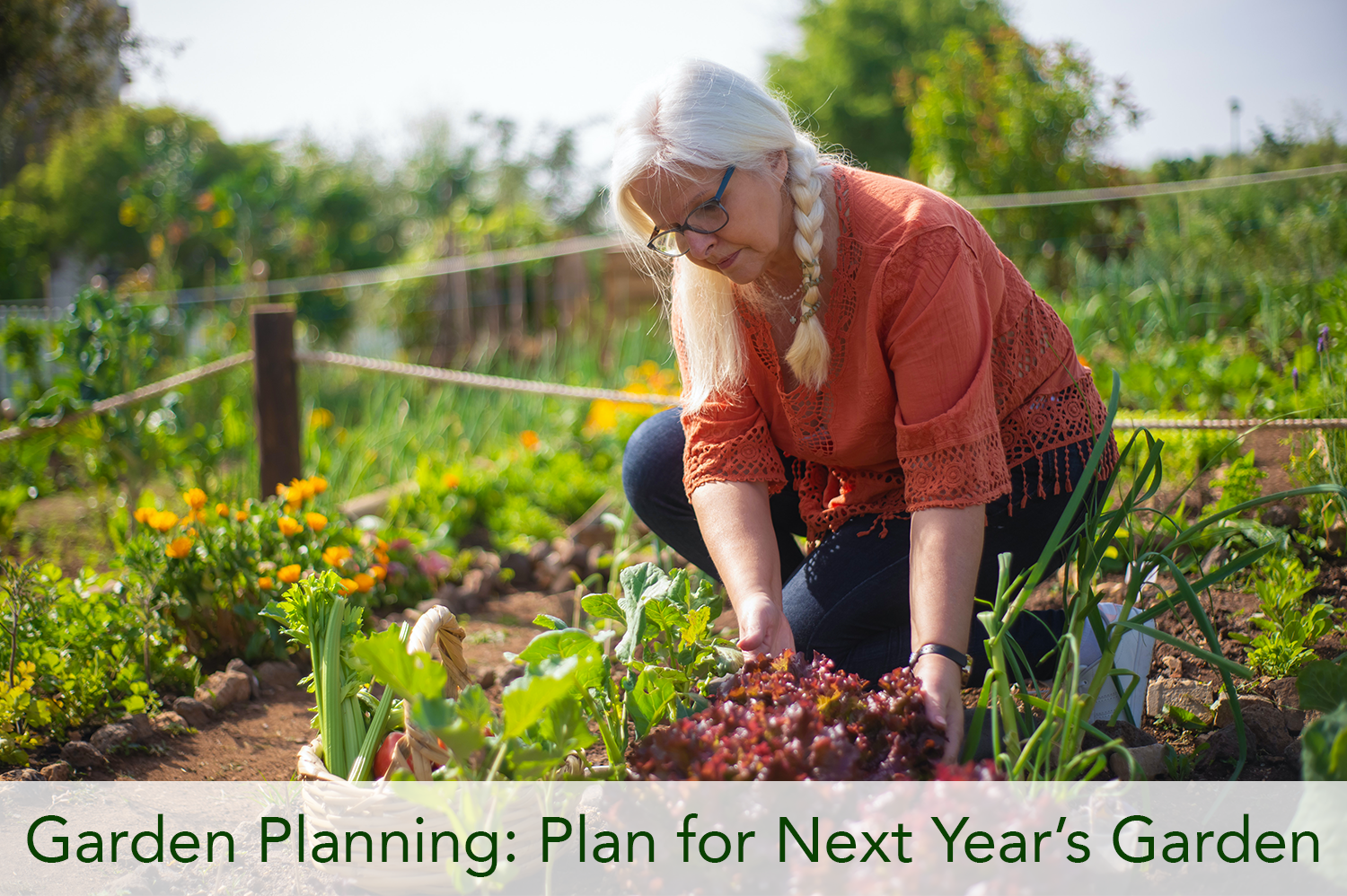 A woman gathering vegetables from her garden, noting which ones worked well for garden planning purposes.